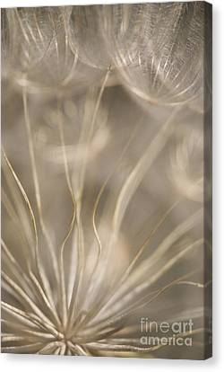Fragile Canvas Print by Anne Gilbert