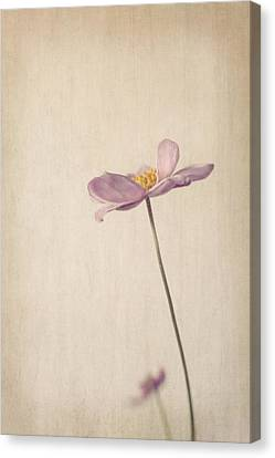 Fragility Canvas Print by Amy Weiss