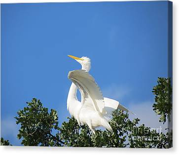 Free To Fly Canvas Print by Feva  Fotos