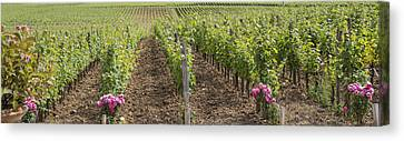 French Vines Canvas Print by Georgia Fowler