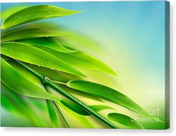 Fresh Bamboo Canvas Print by Bedros Awak