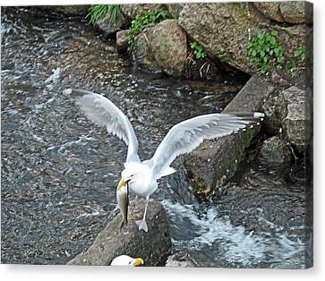 Fresh Catch Of The Day Canvas Print by Barbara McDevitt