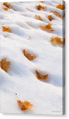 Fresh Fallen Canvas Print by Steven Milner