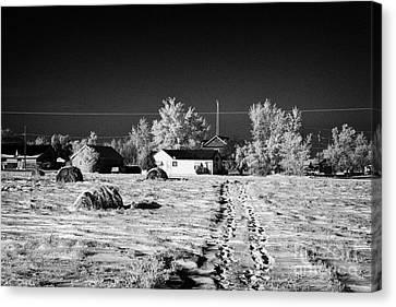 fresh footprints crossing deep snow in field towards small rural village of Forget Saskatchewan Cana Canvas Print by Joe Fox