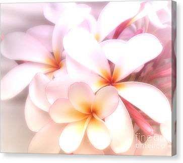 Fresh Frangipani Canvas Print by Karen Lewis