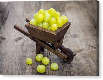 Fresh Green Grapes In A Wheelbarrow Canvas Print by Aged Pixel