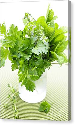 Fresh Herbs In A Glass Canvas Print by Elena Elisseeva