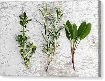 Fresh Herbs Canvas Print by Nailia Schwarz