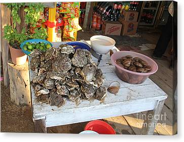 Fresh Oysters Barre De Navidad Canvas Print by Linda Queally
