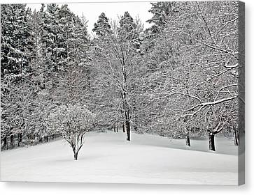 Fresh Snow Scene Canvas Print by Aimee L Maher Photography and Art Visit ALMGallerydotcom