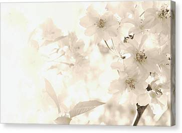 Fresh Spring Day Canvas Print by  The Art Of Marilyn Ridoutt-Greene