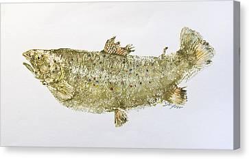 Freshwater Brown Trout Canvas Print by Nancy Gorr