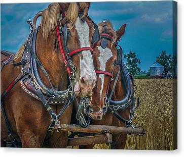 Two Friends Canvas Print by F Leblanc