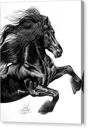 Friesian Canvas Print by Cheryl Poland