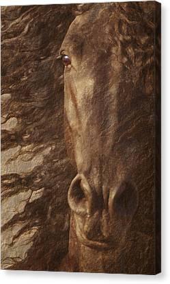 Friesian Spirit Canvas Print by Melinda Hughes-Berland