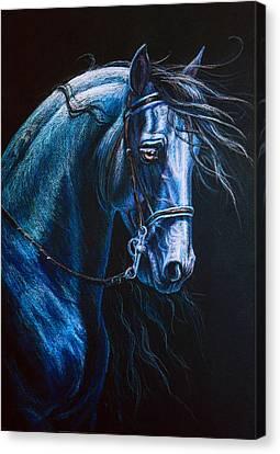 Friesian Stallion Canvas Print by Heidi Carson