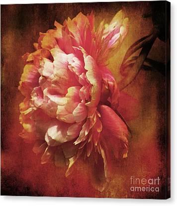 Frilled Splendor Canvas Print by Wobblymol Davis
