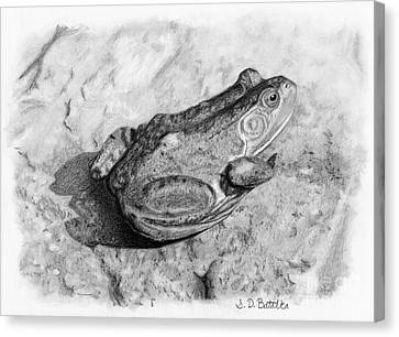 Frog On Rock Canvas Print by Sarah Batalka
