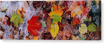 Frost On Leaves, Vermont, Usa Canvas Print by Panoramic Images