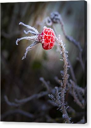 Frosted Canvas Print by Jean Noren
