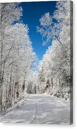 Frosted Winter Canvas Print by John Haldane