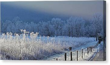Frosty Cades Cove Shoot Canvas Print by Douglas Stucky