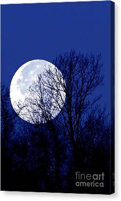 Frosty Moon Canvas Print by Thomas R Fletcher