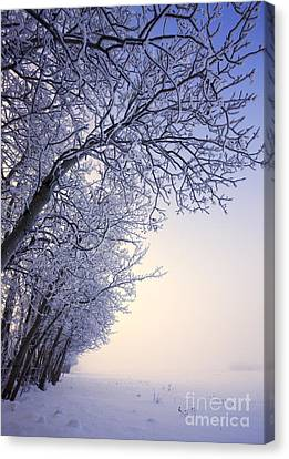 Frosty Pasture Canvas Print by Dan Jurak