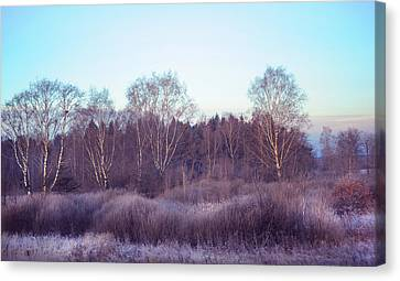 Frosty Purple Morning In Russia Canvas Print by Jenny Rainbow