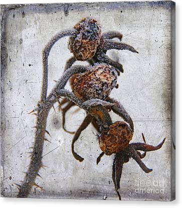 Frozen Canvas Print by Bernard Jaubert