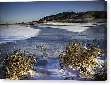 Frozen Slough Canvas Print by Colby Drake