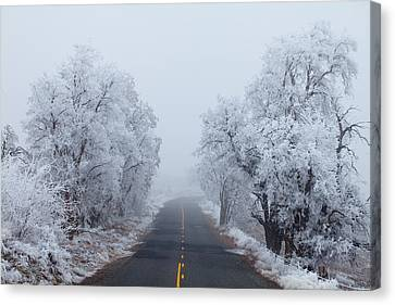 Frozen Trees Canvas Print by Darren  White