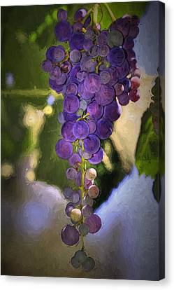 Fruit Of The Vine Canvas Print by Donna Kennedy