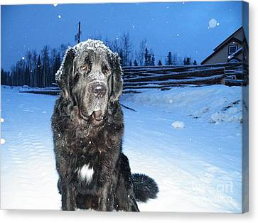 Fully Winterized  Canvas Print by Brian Boyle