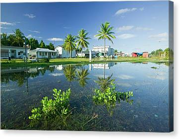 Funafuti Being Flooded By Sea Water Canvas Print by Ashley Cooper