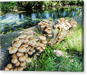 Fungi On A Fallen Tree Branch Canvas Print by Ashley Cooper