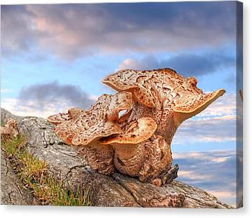 Funky Fungi Canvas Print by Gill Billington