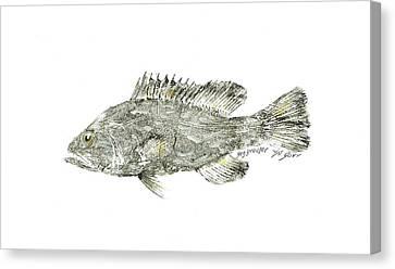 Gag Grouper Canvas Print by Nancy Gorr