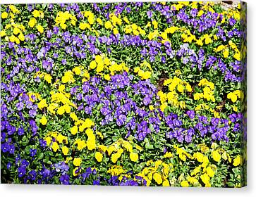 Garden Design Canvas Print by Aimee L Maher Photography and Art Visit ALMGallerydotcom