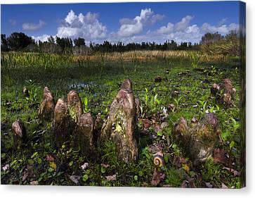 Garden In The Glades Canvas Print by Debra and Dave Vanderlaan