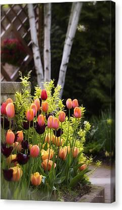 Garden Tulips Canvas Print by Julie Palencia