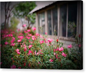 Gardens Of Pink Canvas Print by Linda Unger