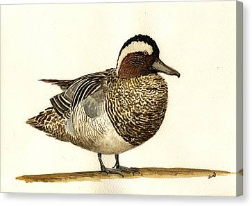 Garganey Duck Canvas Print by Juan  Bosco