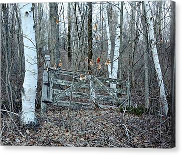 Gate And Birches Canvas Print by Randi Shenkman