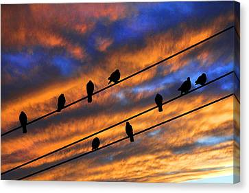Gathering Canvas Print by Mike Flynn