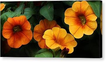Gathering Of Petunias Canvas Print by Bruce Bley