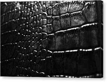 Gator Canvas Print by Anthony Cummigs