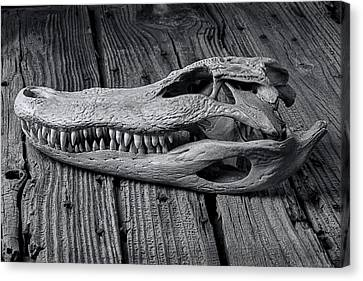 Gator Black And White Canvas Print by Garry Gay