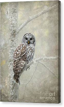 Guardian Of The Woods Canvas Print by Beve Brown-Clark Photography