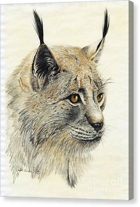 Gazing Lynx Canvas Print by Phyllis Howard